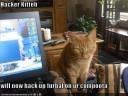 hacker-kitteh