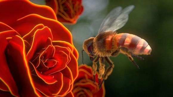 36 - aliasguru - Humble Bee