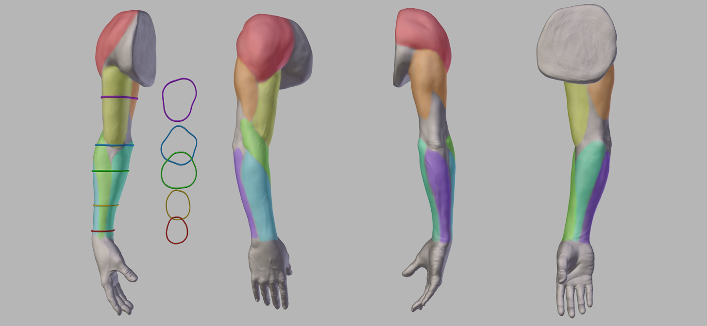 Anatomy Of The Arm Download Included Blendernation