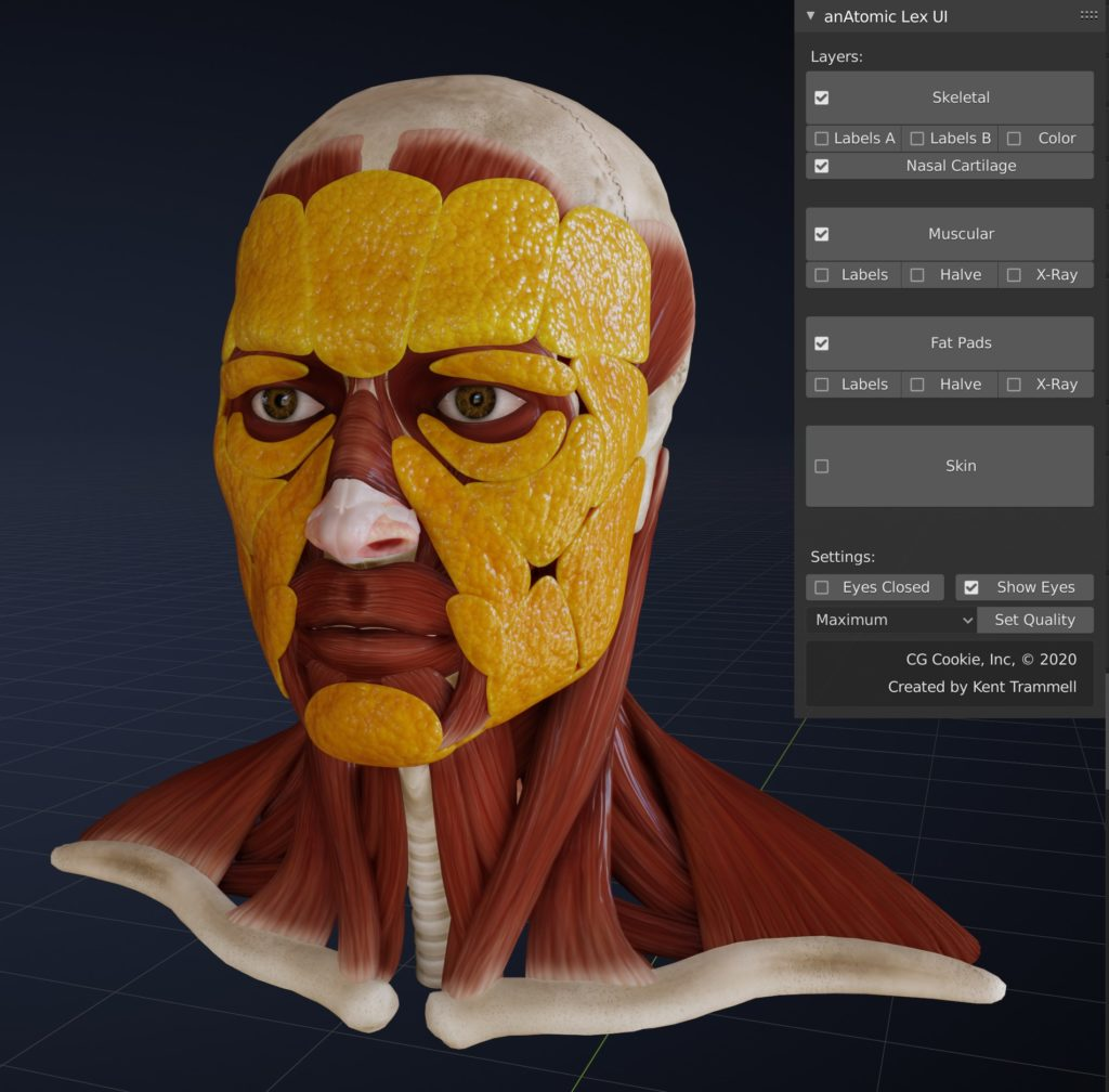 Switching off the skin layer reveals the facial fat pads